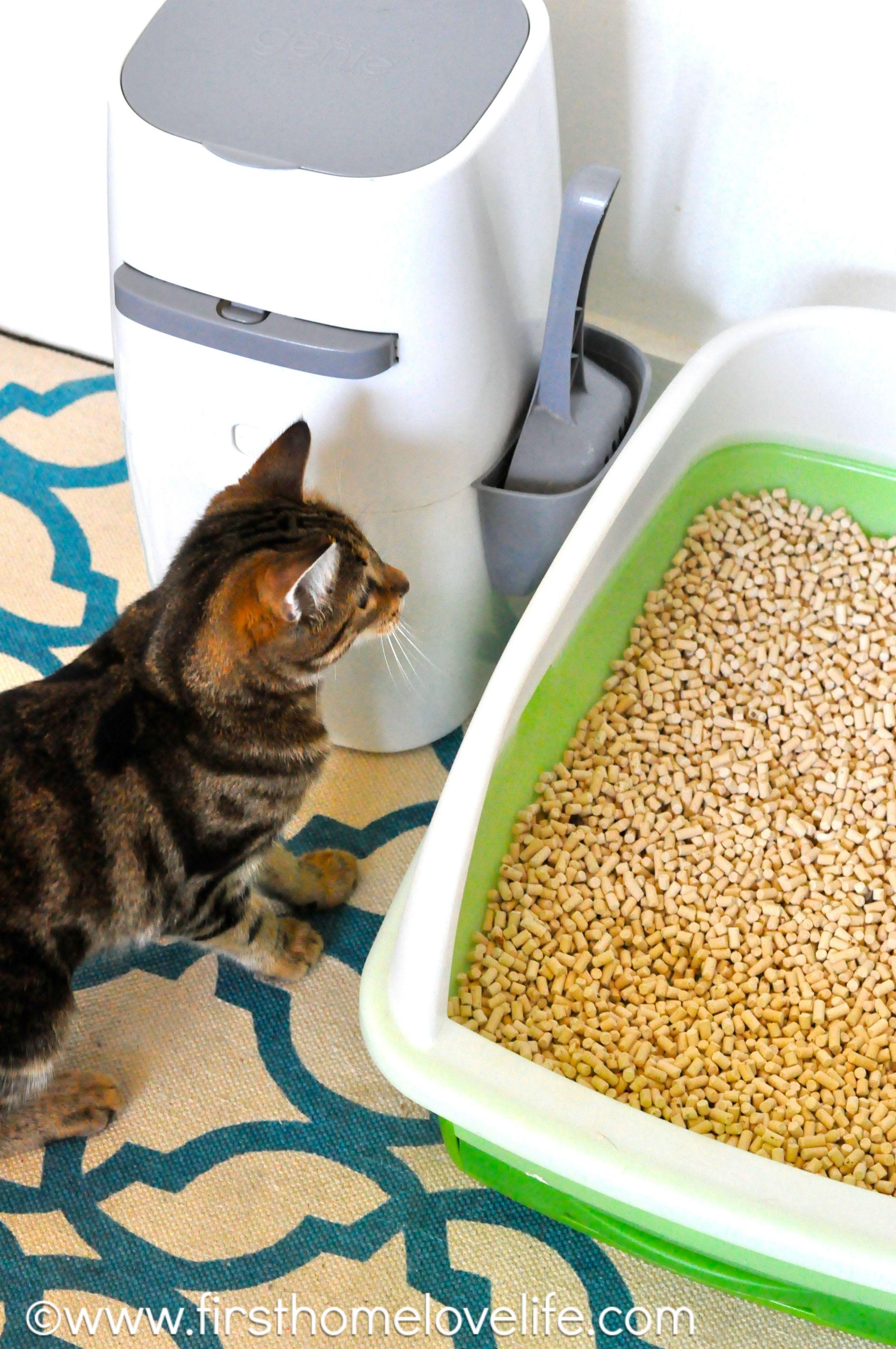 No More Litter Box Odor Cat litter smell, Cat training
