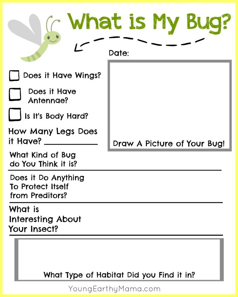FREE insect identification printable for kids Nature science – The Nature of Science Worksheet