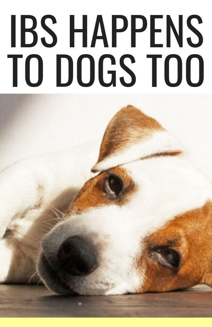Puppy Training Obedience And Dog Training Tips Good Things For
