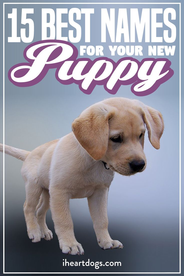 15 Best Names For Your New Puppy Puppy Names Dogs Names List Best Puppy Names