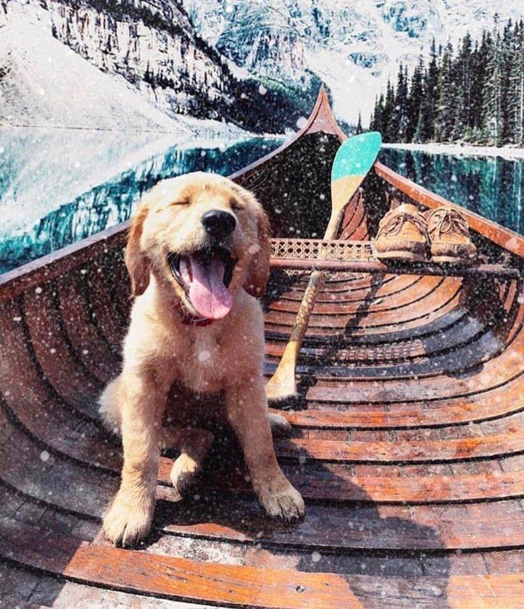 Alberta Cute Puppy Dog Animal Pets Puppies