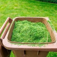 18 Things You Should Never Do To Your Lawn