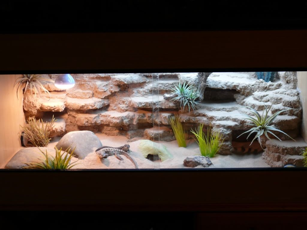 Desert Landscape My First Rock Background Captivebred Reptile Forums Clified Forum