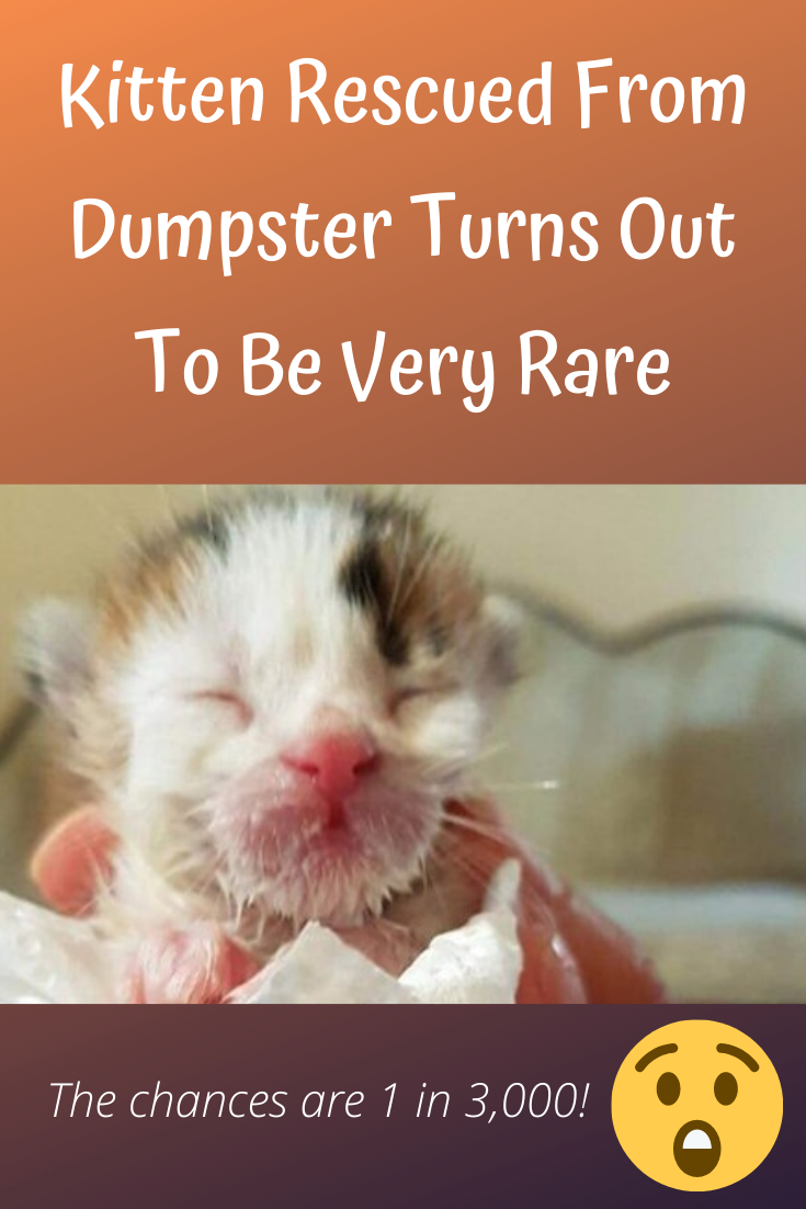 OneWeekOld Kitten Is Rescued From Dumpster—Then Rescuer