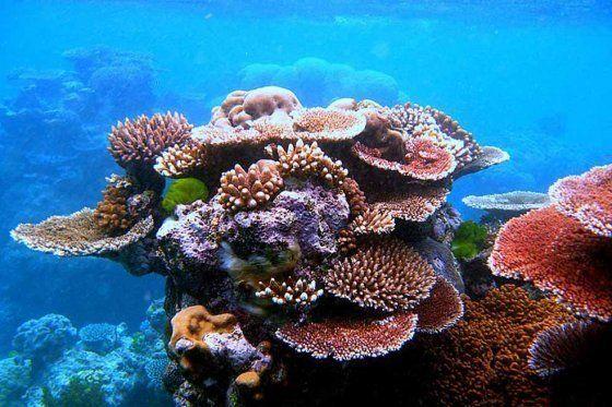 Cambio climático destruye la mitad del mayor arrecife de coral de Japón