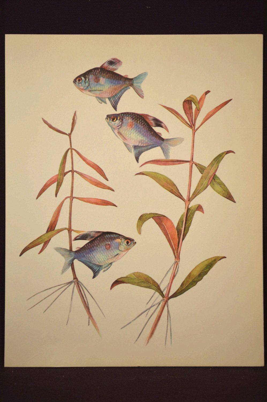 Beach House Decor Tropical Fish Art Wall Decor Aquarium Fish Print ...
