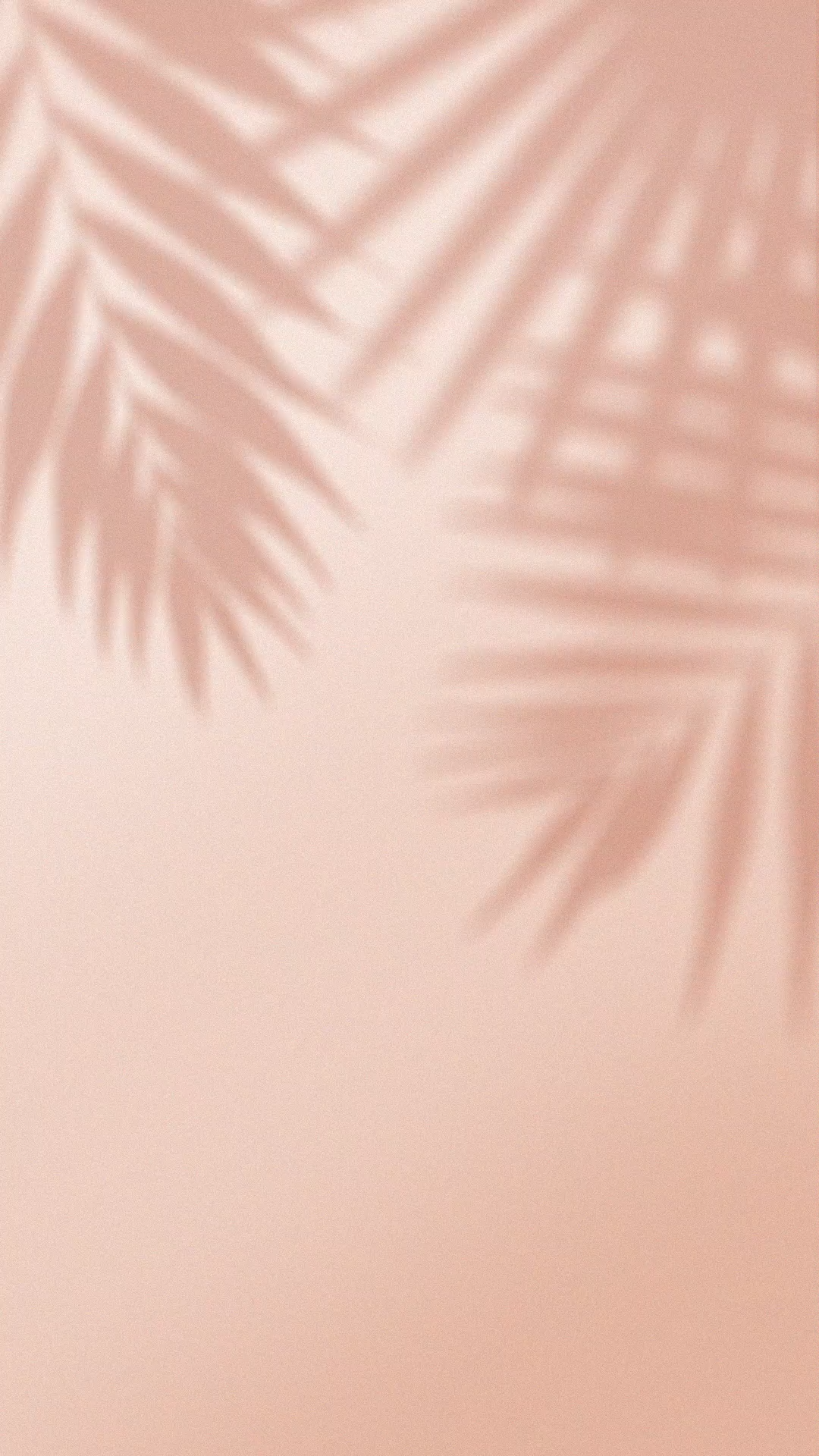 animated palm leaf shadow design bundle | tropical