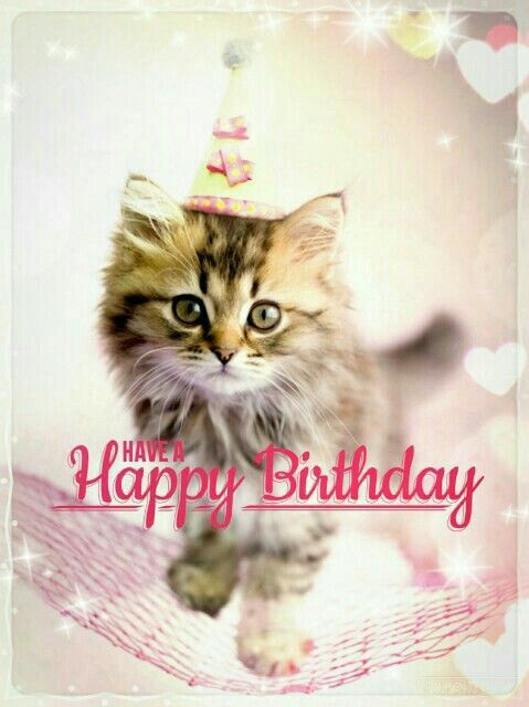 Happy Birthday Happy Birthday Cat Happy Birthday Kitten