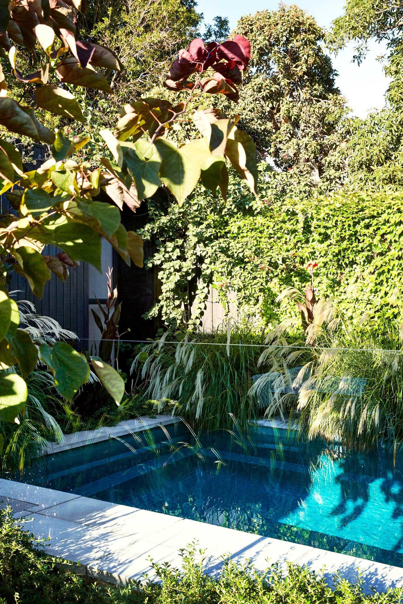 Plant / Life: A Lush Fitzroy Garden | Melbourne garden ...