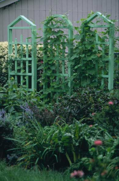 A trellis trio these trellises do the work of a fence a for Trellis or arbor