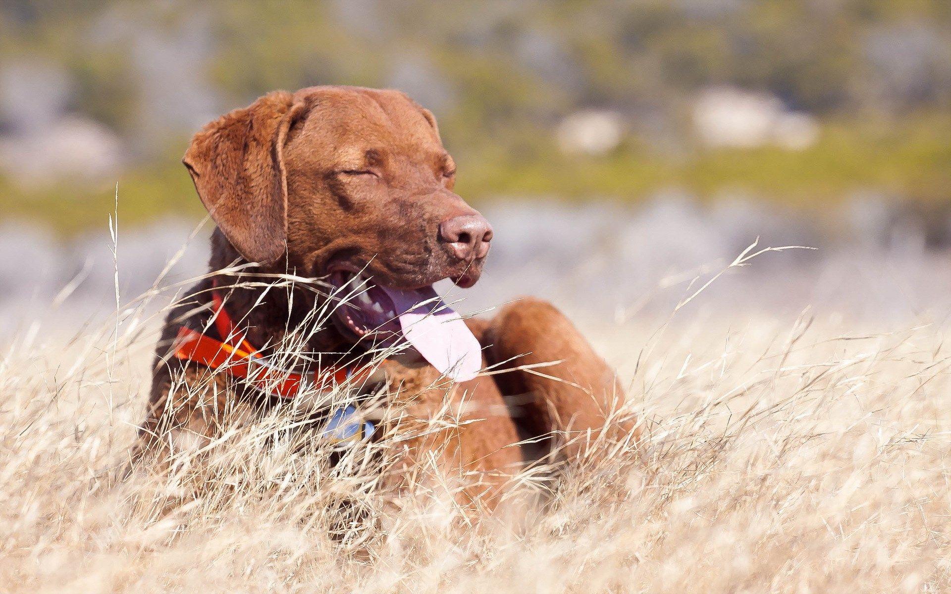 1920x1200 HD Widescreen Wallpaper - dog