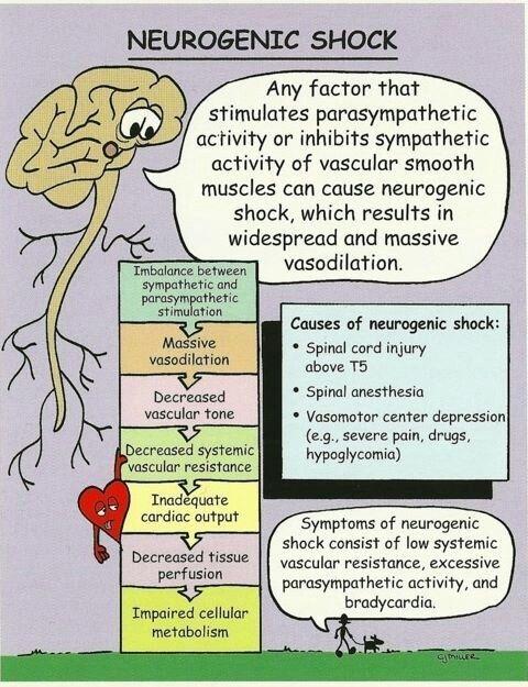 Neurogenic Shock Diagram On Meducation