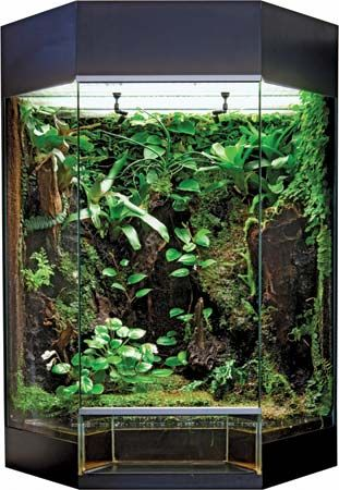 Pin By Kristy Winburn Revels On Terrariums Vivarium Reptile