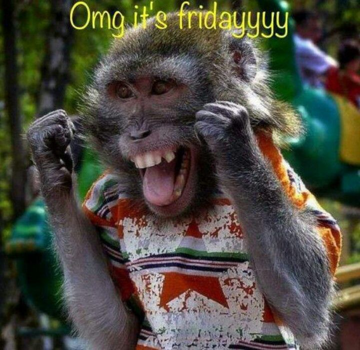 TGIF! Monkey says it's almost time to go home... | Friday ...