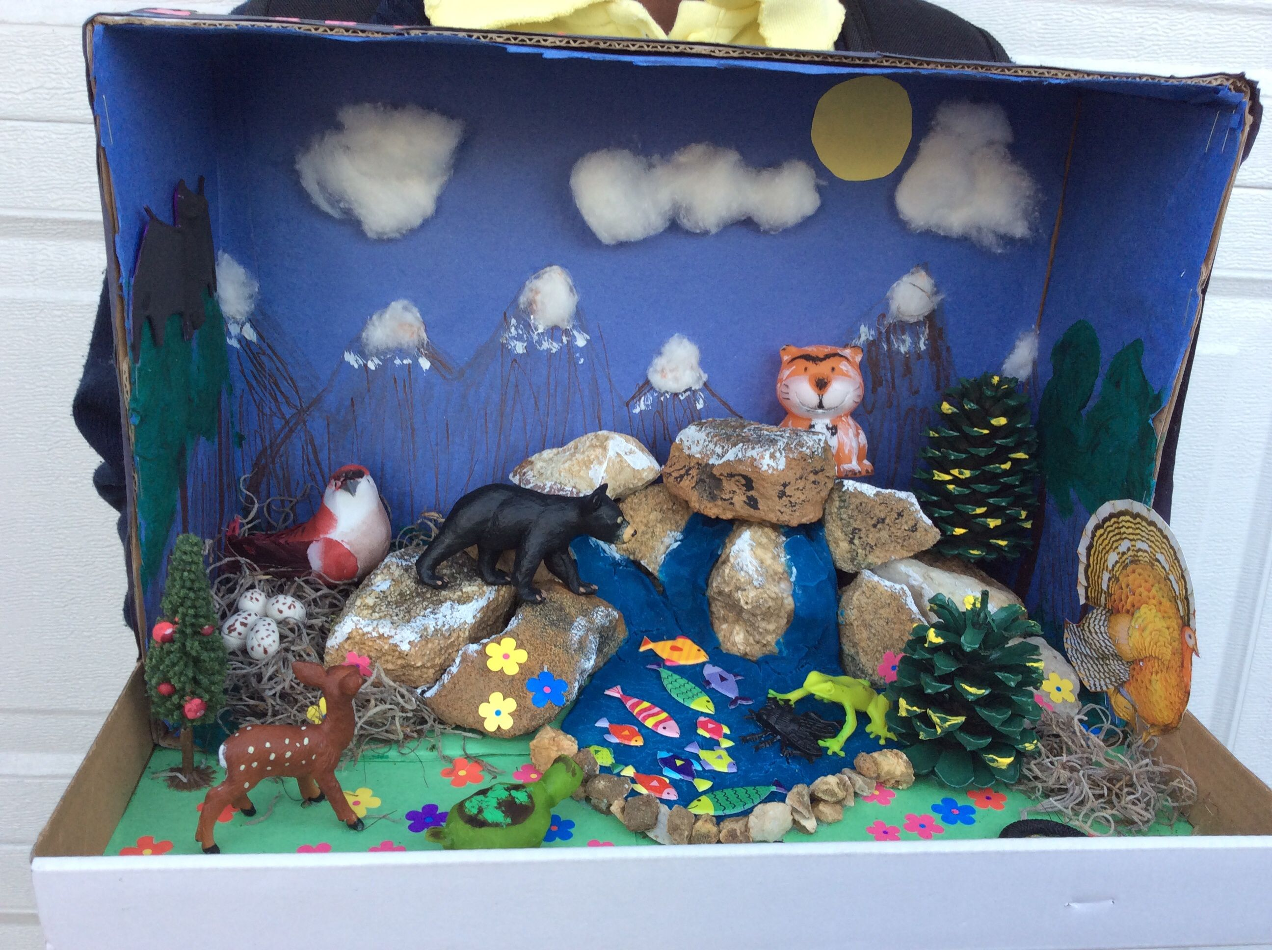 My Daughter S 3rd Grade Science Project Blue Ridge Habitat Diorama