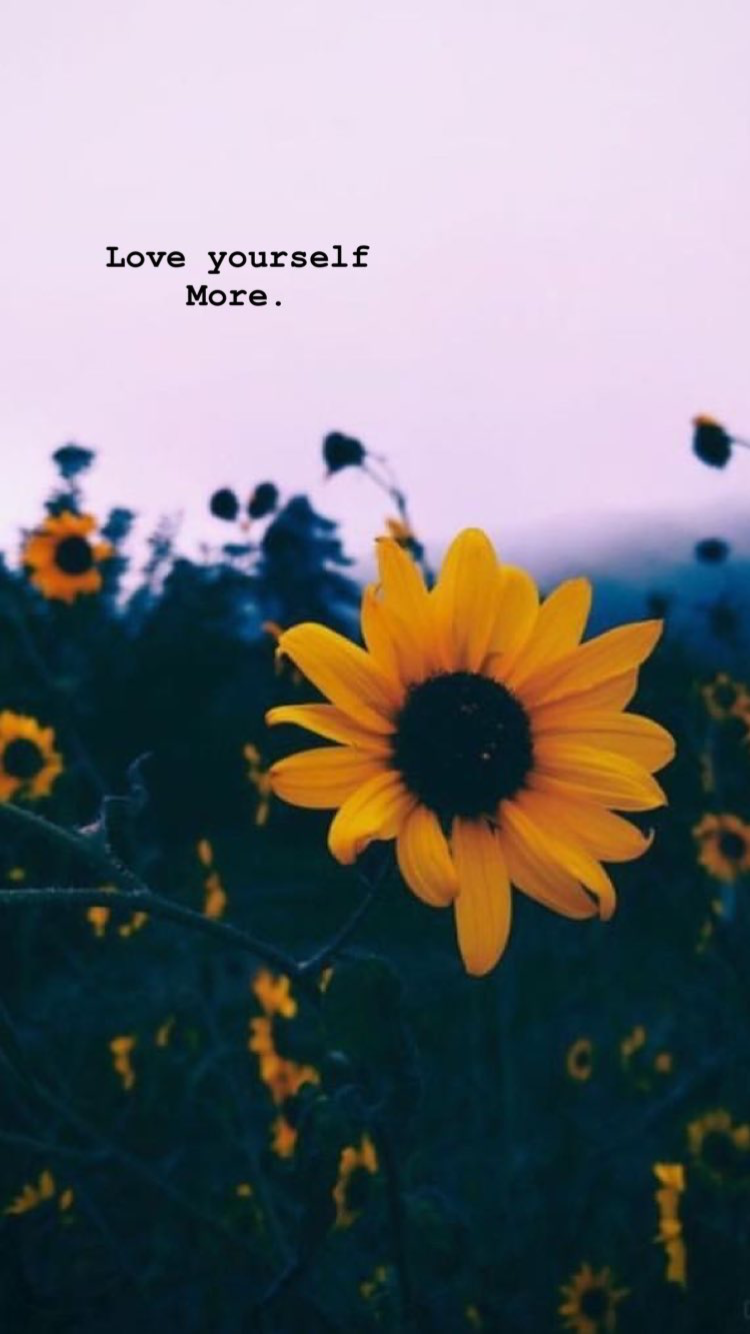 Download Cute Aesthetic Sunflower Wallpaper