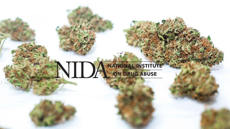 Estudio financiado por NIDA demuestra que leyes de cannabis medicinal no incrementan uso en jovenes - http://growlandia.com/marihuana/estudio-financiado-por-nida-demuestra-que-leyes-de-cannabis-medicinal-no-incrementan-uso-en-jovenes/