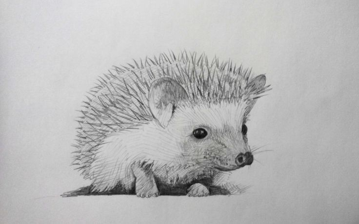 Cute hedgehog drawing google search