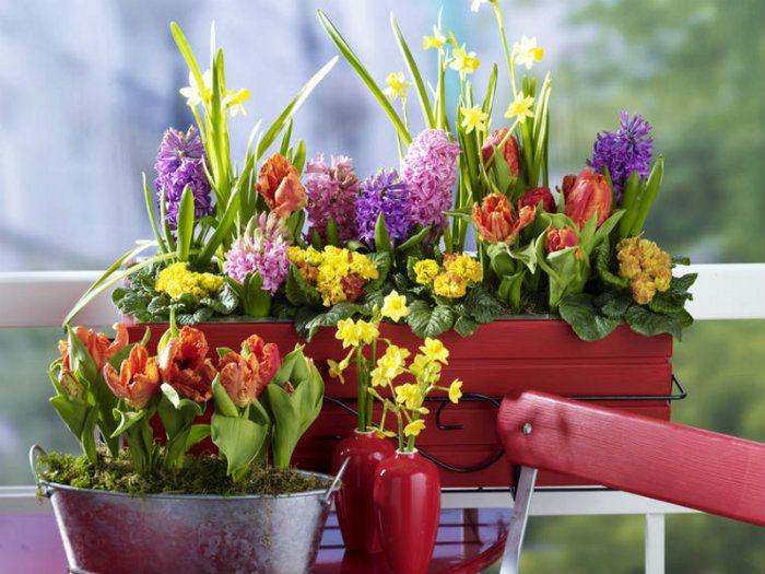 Frühling mit Blumenkästen Blumenkästen, Frühling und Wohnzimmer - balkon ideen blumenkasten gelander
