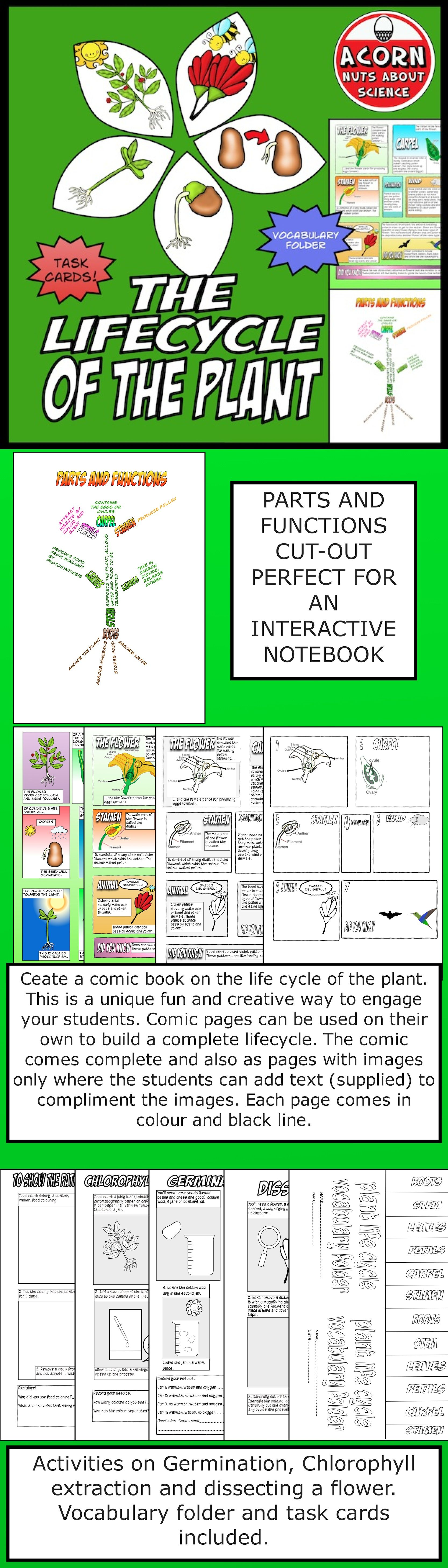 Life Cycle Of The Plant With Images