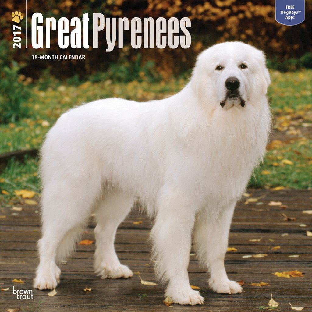 Great Pyrenees 2017 Calendar Will Ship In July 2016