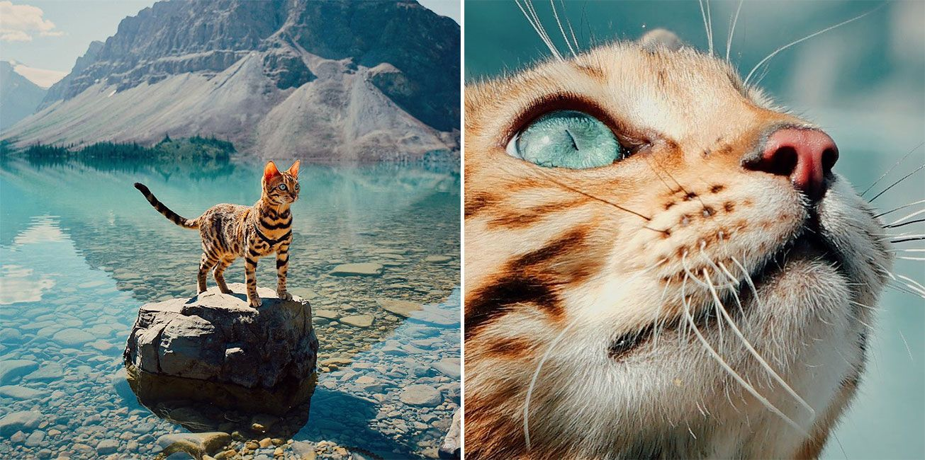 Suki Is A Daredevil Bengal Cat From Canada Who Loves Adventures She Has More Than 200 000 Instagram Followers And Co Adventure Cat Bengal Cat Kitten Pictures