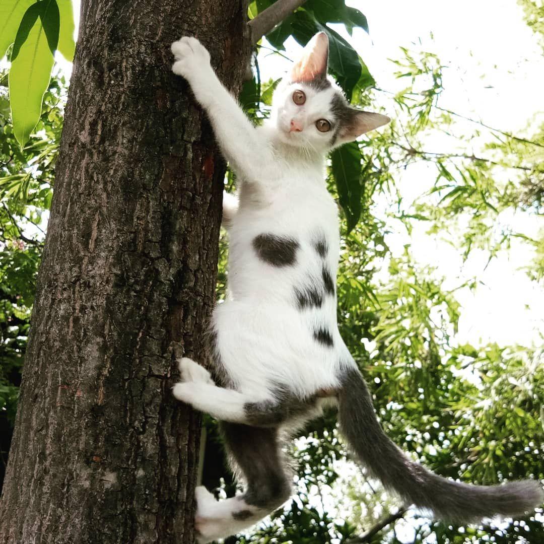 ป กพ นโดย Garden Life ใน ล กแมวน าร ก ล กแมว แมว น าร ก