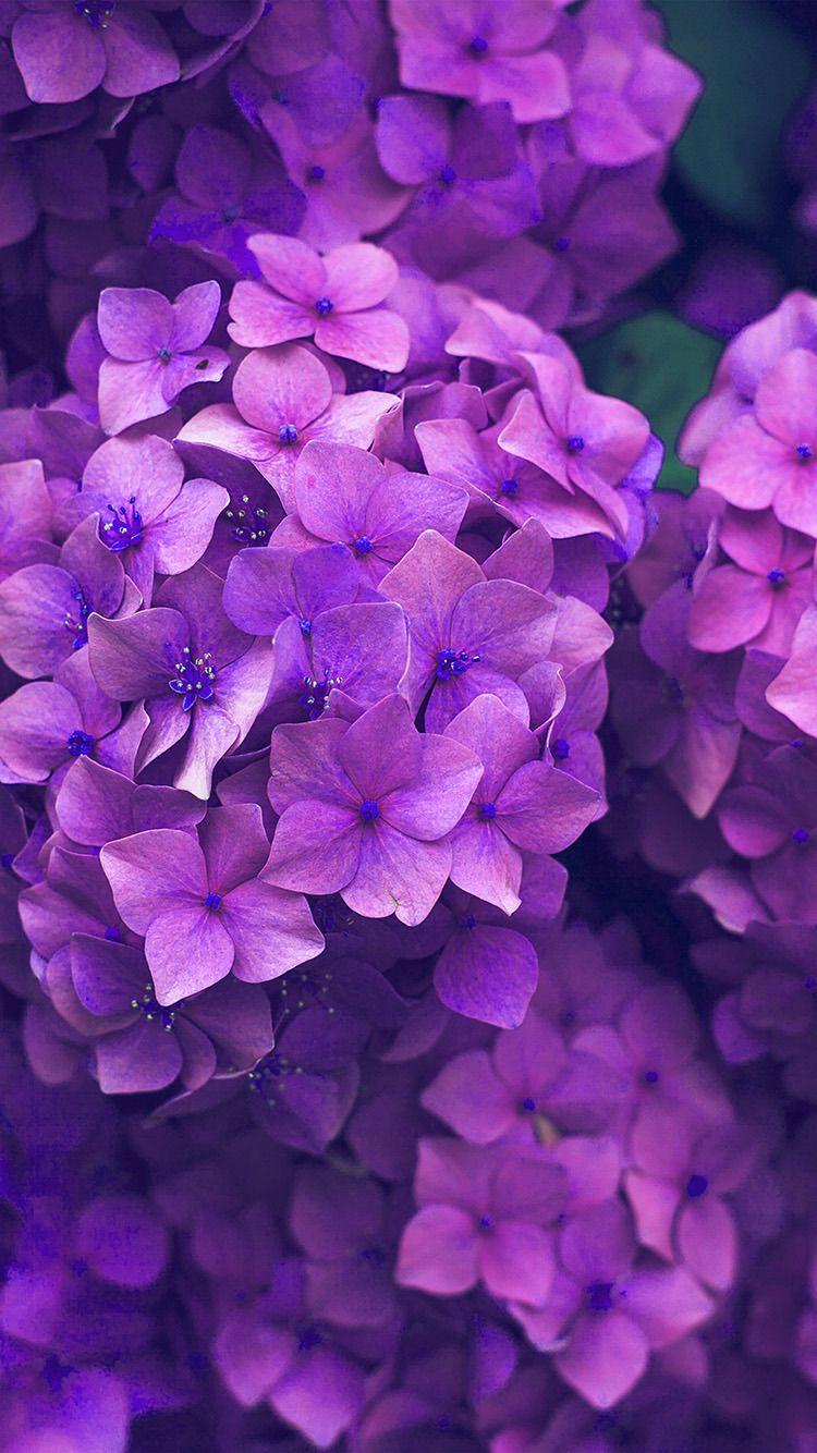 Get Wallpaper Http Iphone6papers Com Nr09 Flower Spring Pink Purp Fondos De Pantalla De Primavera Fondo De Pantalla De Android Fondo De Pantalla Minimalista