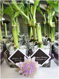 Bamboo party favors google search 70th birthday pinterest 70 bamboo wedding favors also a centerpiece a good luck charm use the serenity circle as the printable on each junglespirit Choice Image