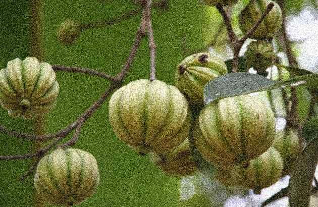 garcinia cambogia funziona per perdere peso