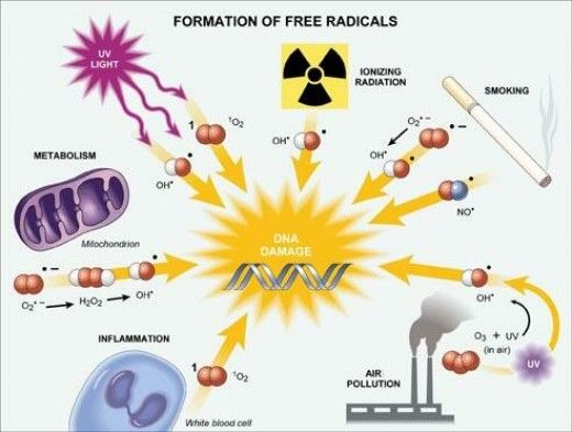 Free Radicals and Aging