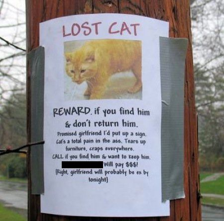 10 Funny Missing Pet Signs Losing A Pet Lost Cat Poster Cat