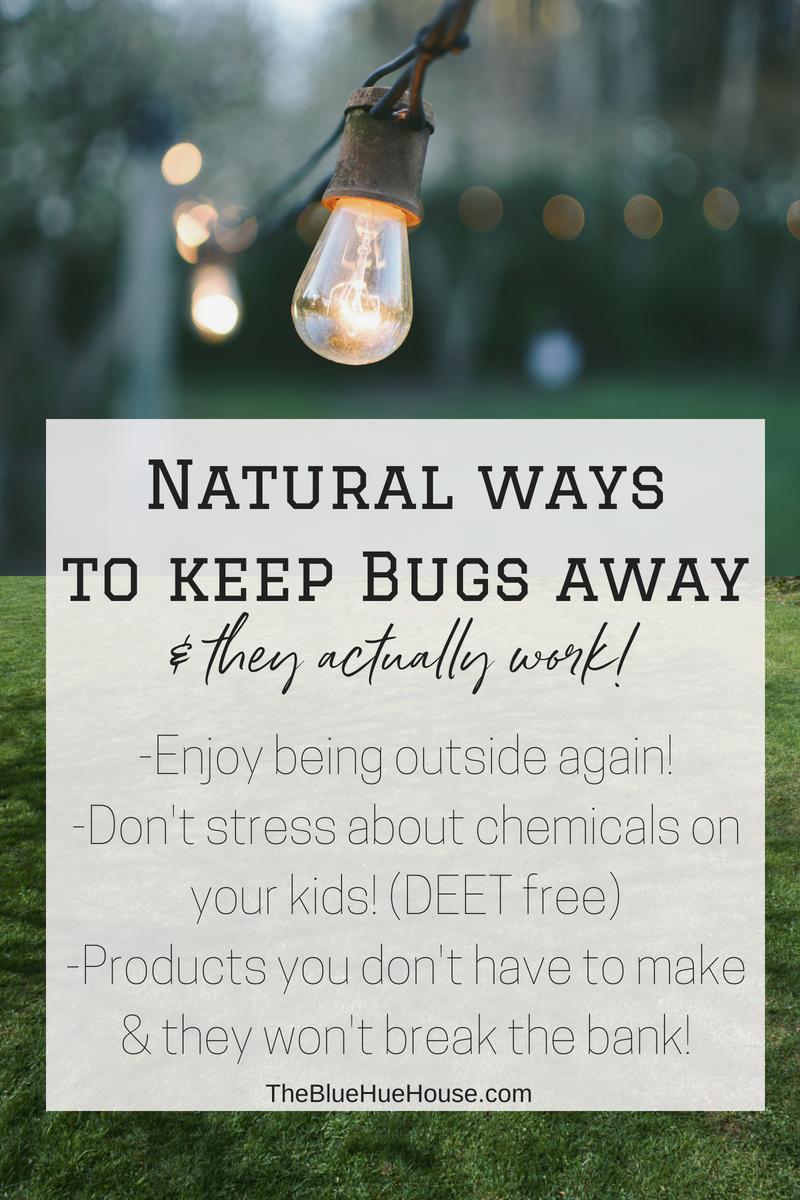 Keeping Mosquitos Away the Natural Way | The Blue Hue ...