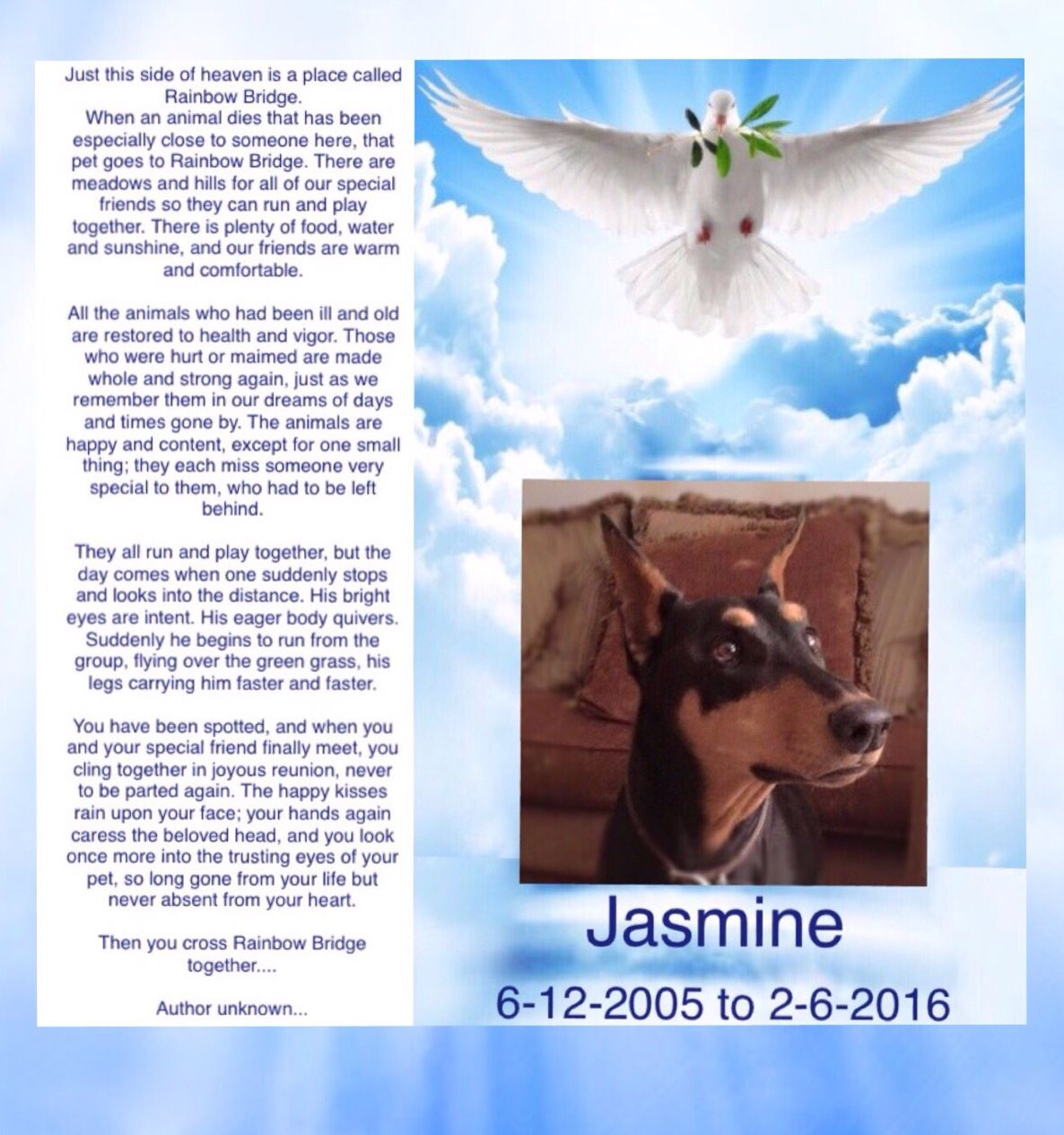 Jasmine Rip Our Doberman Crossed The Rainbow Bridge She Is Reunited With Tosha Pebbles And Bubbles Run Free My Swe Rainbow Bridge Special Friend Pets