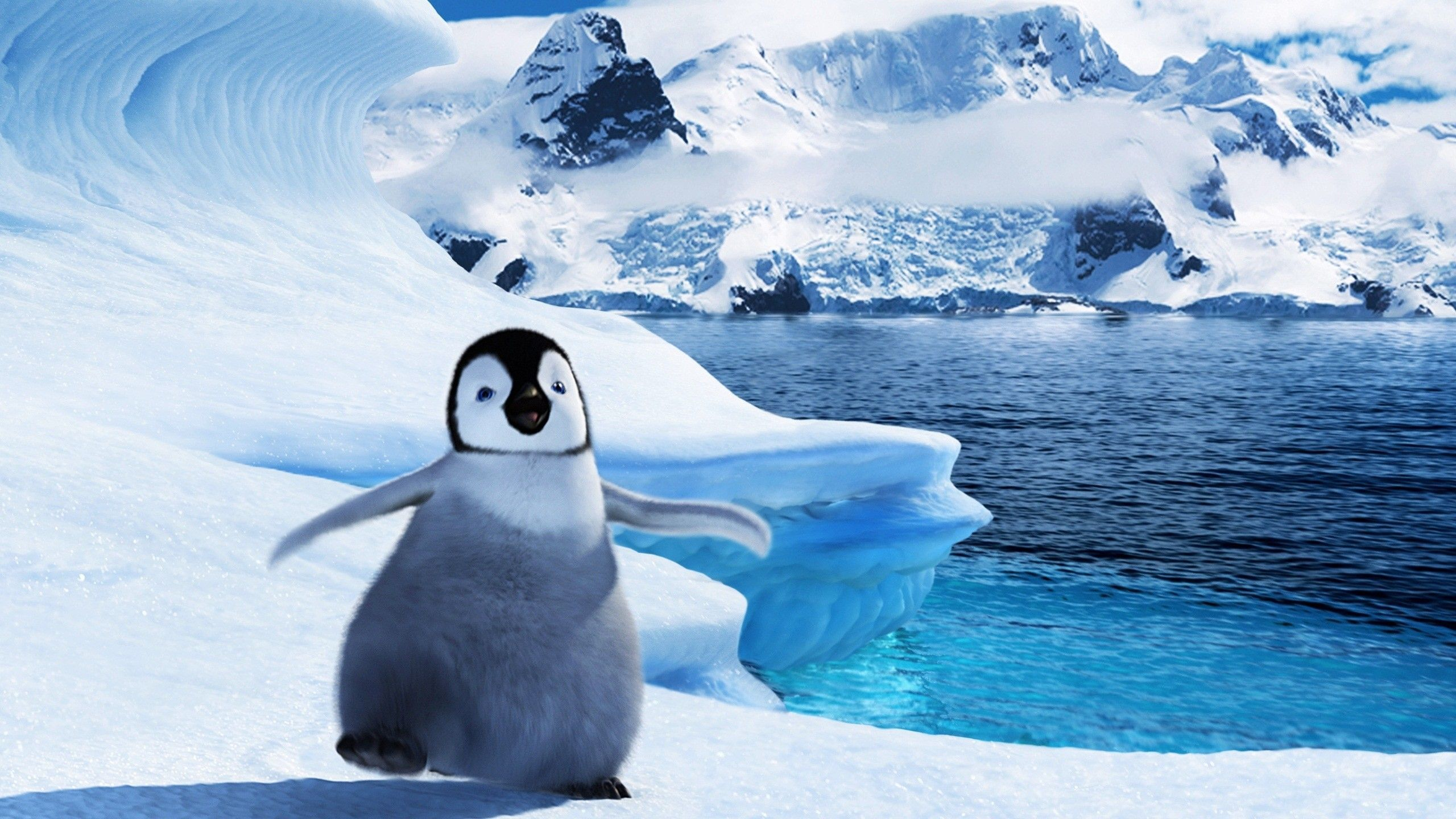 Cute penguins cute mighty pictures - Baby Penguin Wallpaper