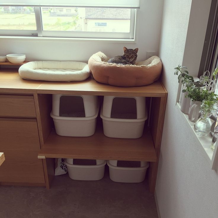 キッチン ねこのいる日常 猫 ねこばかりですいません 猫 トイレ などのインテリア実例 2017 05 23 19 54 34 Roomclip ルームクリップ Roomclipルームクリップ キッチンねこのいる日常猫ねこばかりですいません猫 トイレな 猫 トイレ インテリア