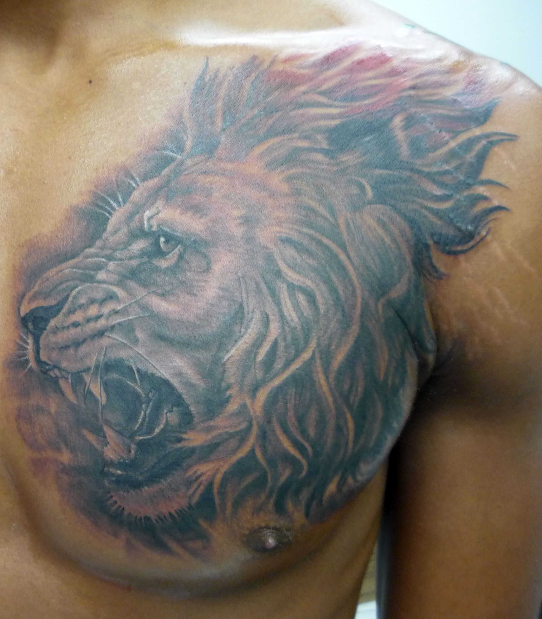 Related Keywords  U0026 Suggestions For Lamb Lion Chest Tattoos