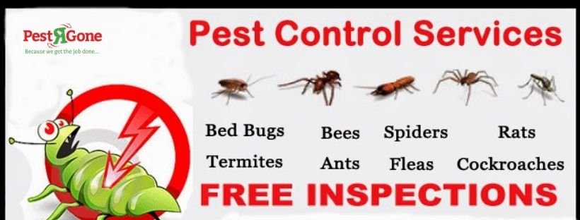 Pestrgone Have A Team Of Experienced Staff Who Have Years Of Experience On Efficiently Removing The Pests Like Mice Cockroaches Pests Pest Control Services