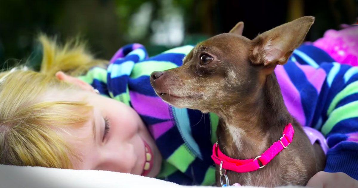 Sunshine rescue puppies ct