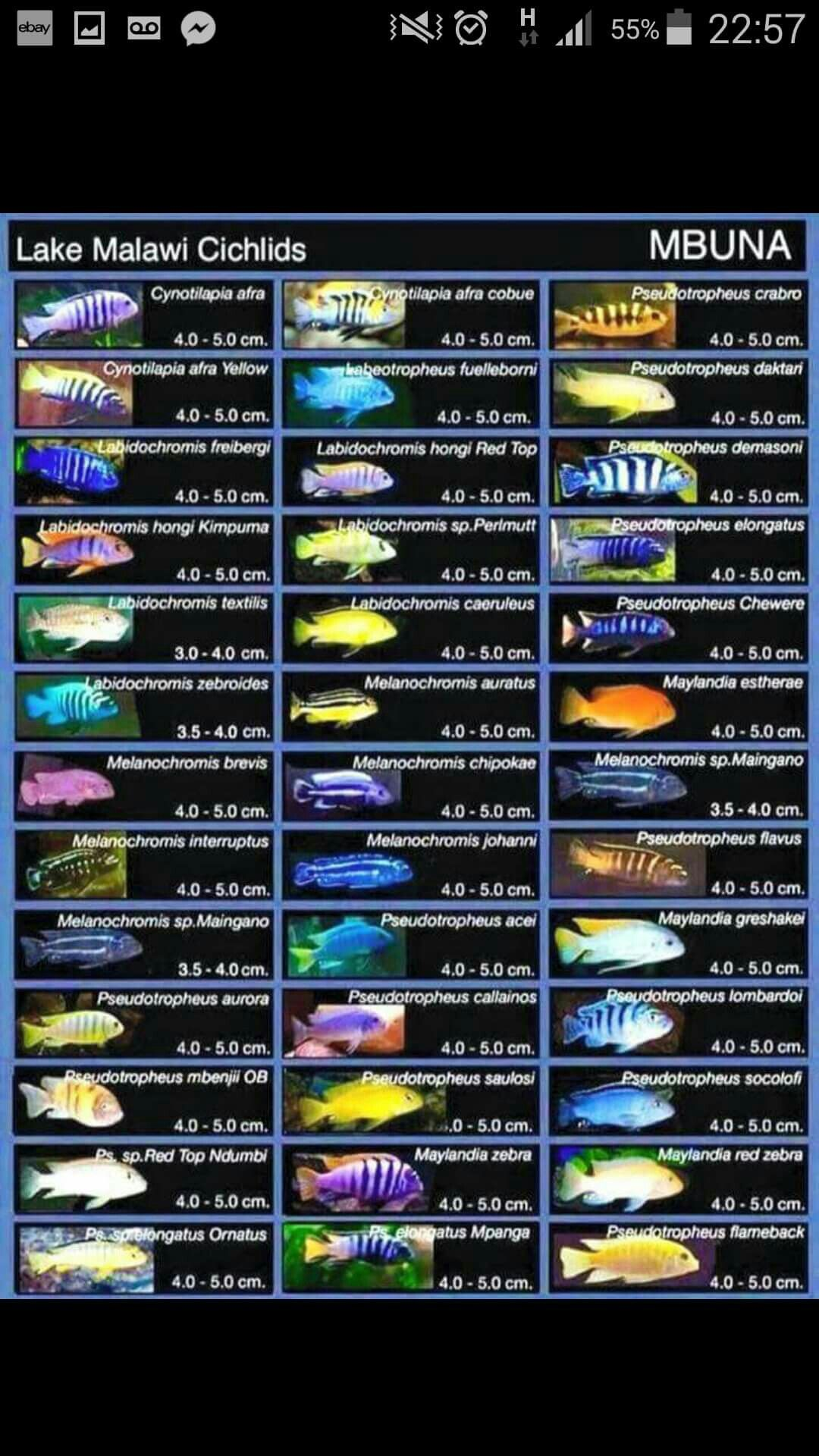 """Search Results for """"African Cichlid Identification Chart ... 
