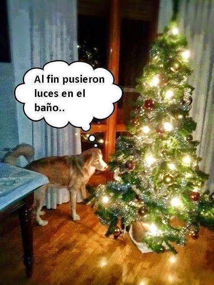 Feliz Navidad Http Imagenes Graciosas Para Compartir Blogspot Com Chistes Imagenes Graciosas Whatsapp Memes Divertidos