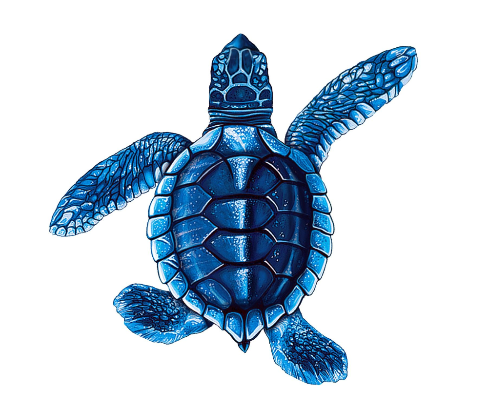 Baby Turtle Png Google Search Sea Turtle Art Turtle Painting Sea Turtle Drawing