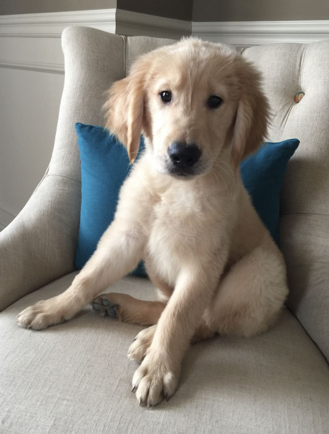 Adopt Sunny On Petfinder Golden Retriever Baby Rescue Dogs