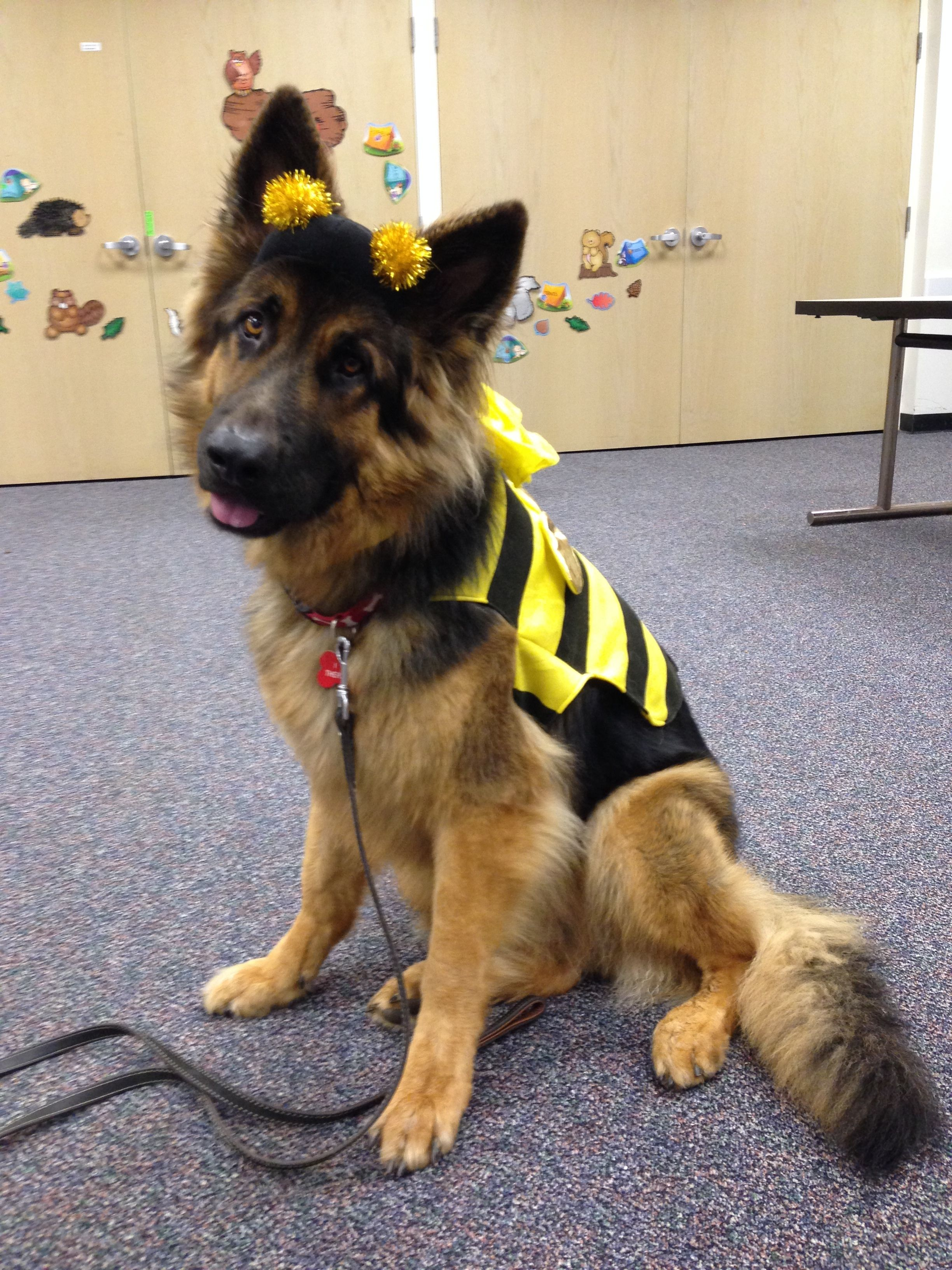 Check Out My Entry In Milk Bones Halloween Pet Costume