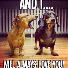 Dachshund Memes And Wiener Dog Humor Funny Dachshund Dog