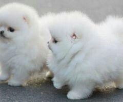 Ugh i want one