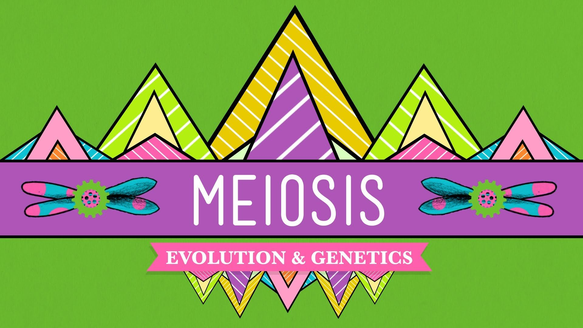 Meiosis Crash Course