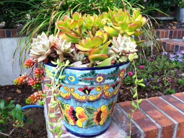 Succulents In Mexican Talavera Pot Garden Pottery Mexican Garden Colorful Garden