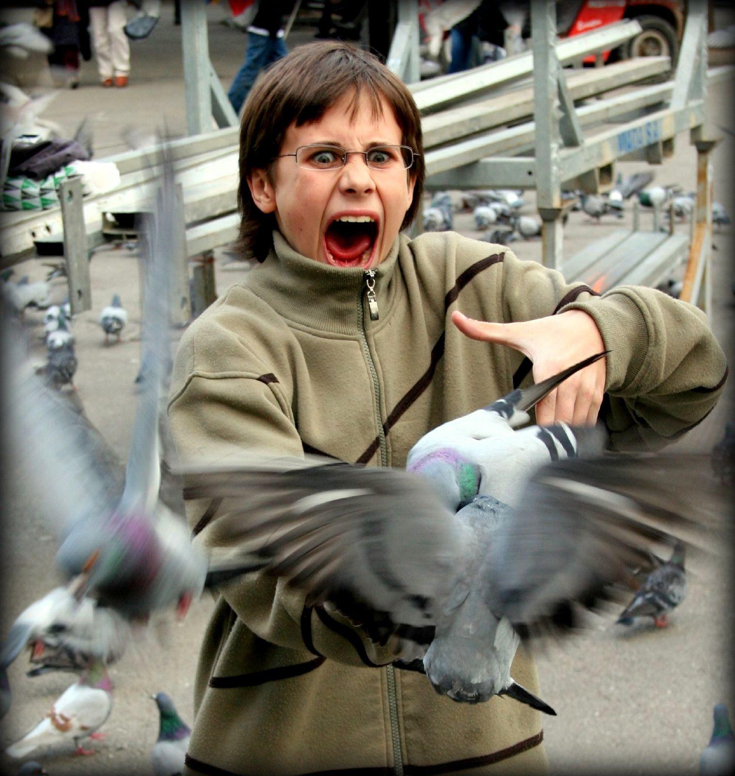 Als je langs een groepje duiven loopt schrik je je altijd een ongeluk