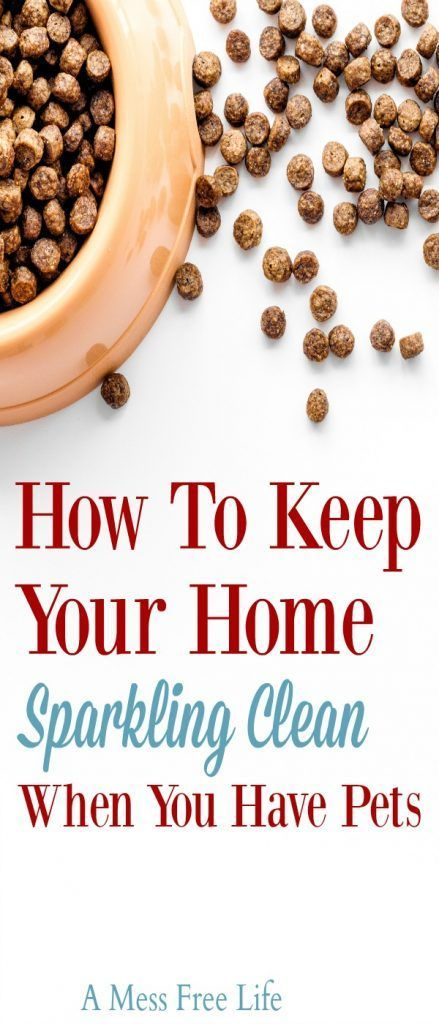 Keeping your house clean can be a real challenge especially when you have dogs and cats. Pets make a mess and someone has to clean up after them. Our brilliants tips and hacks show you how the easy way. #housecleaning #keepthehouseclean #pets